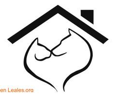Web gratuita de difusiones Leales.org - Imagen 1