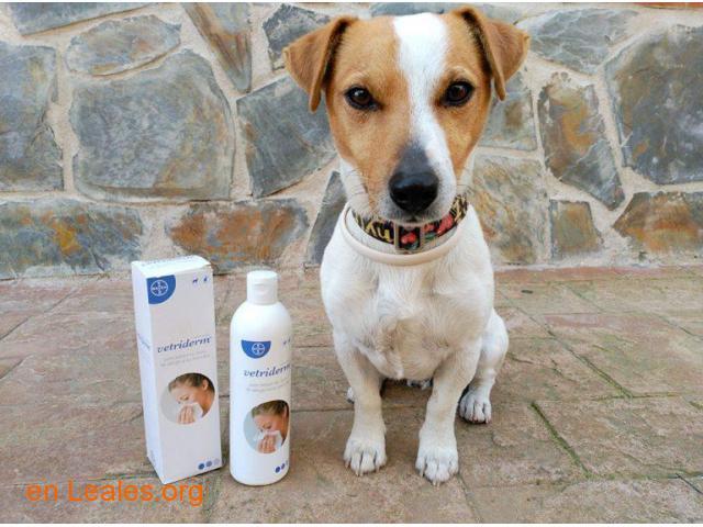 Vetriderm, el antialérgeno para Animales - 4