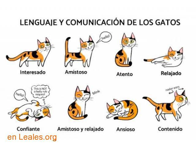Diccionario Felino - 1