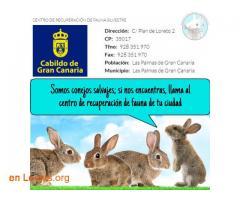 Centro de recuperación de fauna salvaje  - Imagen 1