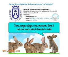 Centro de recuperación de fauna salvaje  - Imagen 2