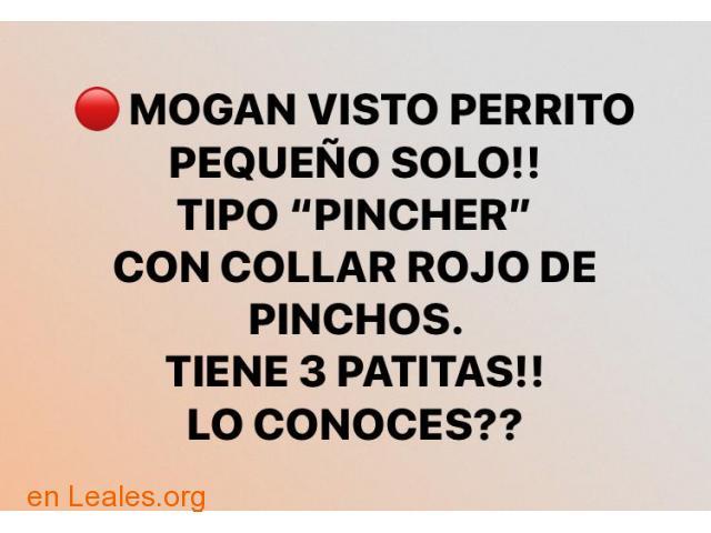ENCONTRADO- VISTO EN MOGAN!!