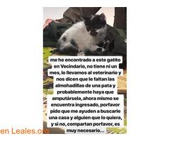 URGENTE AYUDA VETERINARIA Y PROTECTORA.. - Imagen 2