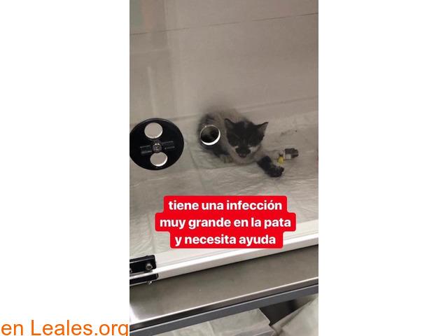 URGENTE AYUDA VETERINARIA Y PROTECTORA.. - 4