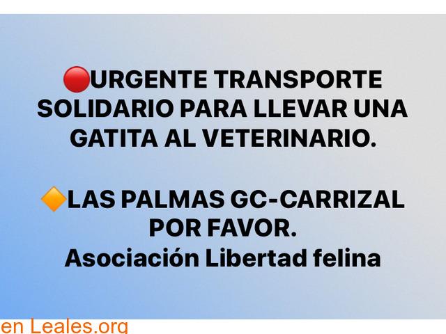 URGENTE TRANSPORTE SOLIDARIO,PARA GATITA - 1