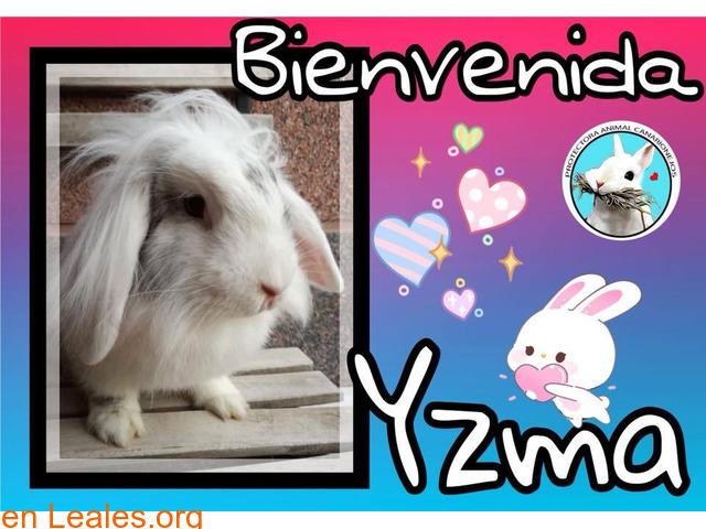 Yzma parece invisible - 1