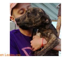 Cheyenne ya adoptado - Imagen 1