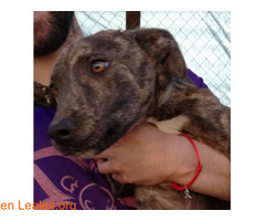 Cheyenne ya adoptado - Imagen 7
