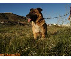 Tobias ya adoptado - Imagen 4