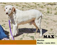 MAX - Imagen 1