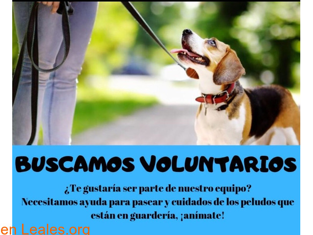 Buscamos voluntariado para guardería  - 1