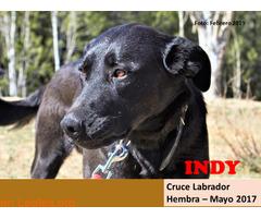 INDY - Imagen 1