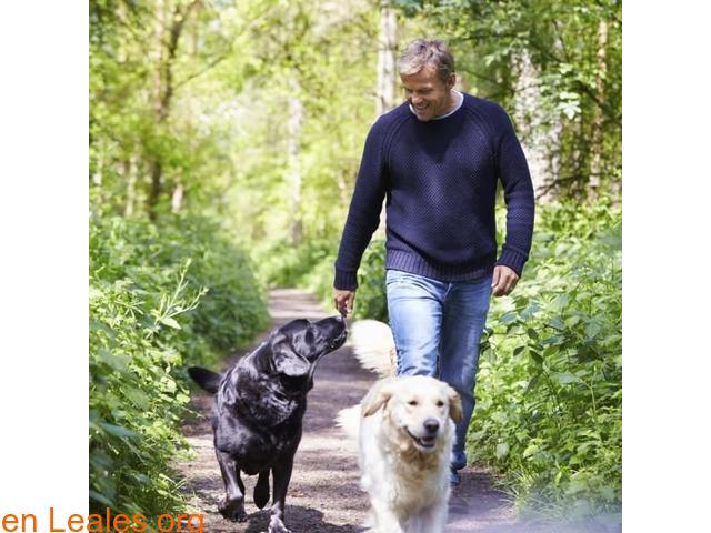 Perros y salud cardiovascular - 1