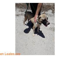 Caso urgente - Oscar en adopción* - Imagen 2