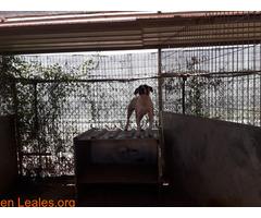 Caso urgente - Oscar en adopción! - Imagen 9