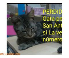 PERDIDA EN SAN ANTONIO**  LA HAS VISTO?? - Imagen 4