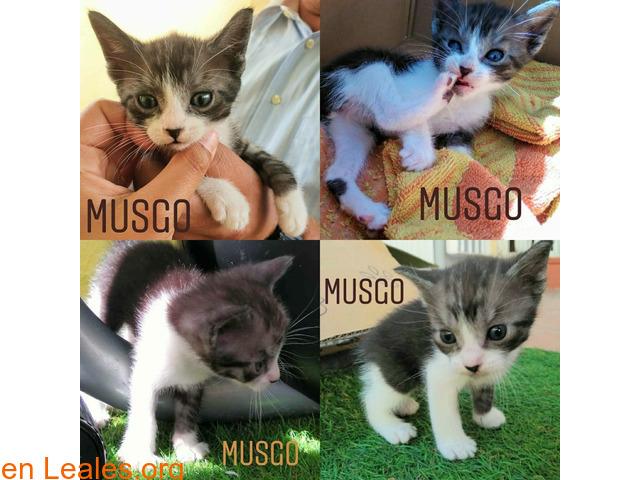 Musgo - 1