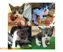 Musgo - Imagen 1