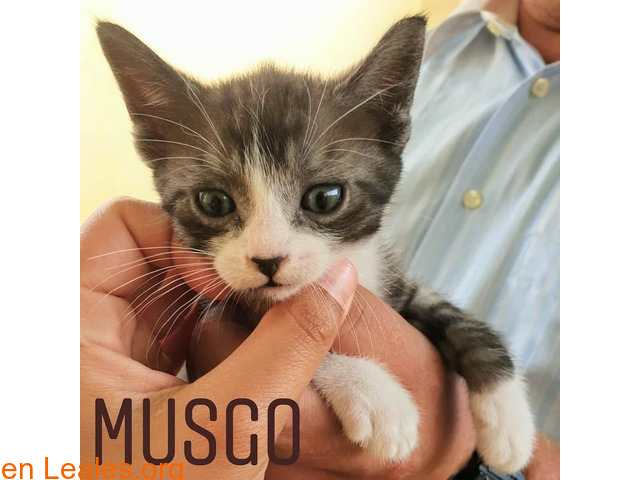 Musgo - 2