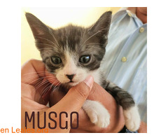 Musgo - Imagen 2