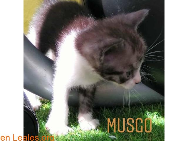 Musgo - 3