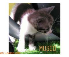 Musgo - Imagen 3