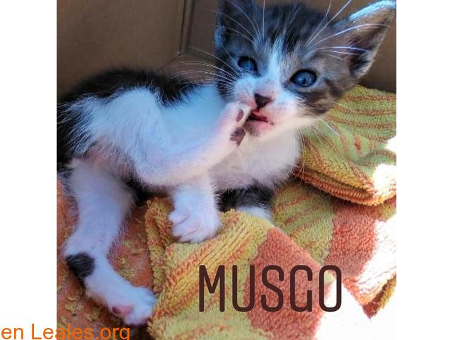 Musgo - 4