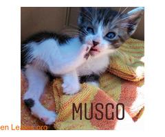 Musgo - Imagen 4