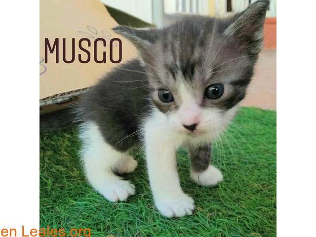 Musgo - 5