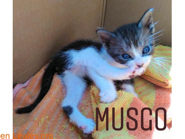 Musgo - 6