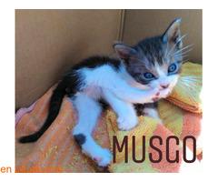 Musgo - Imagen 6