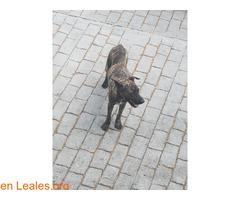 Perrita encontrada en Las Palmas - Imagen 1