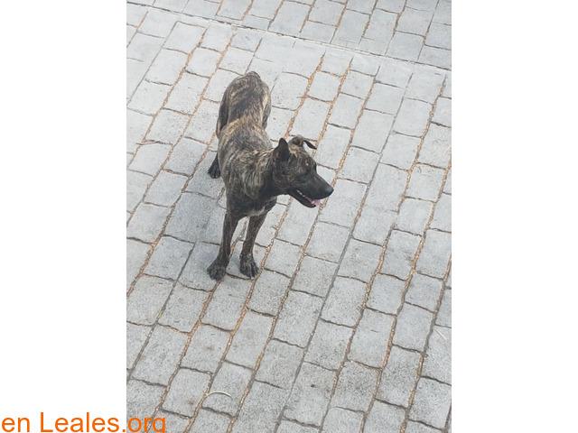 Perrita encontrada en Las Palmas - 2