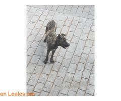 Perrita encontrada en Las Palmas - Imagen 2