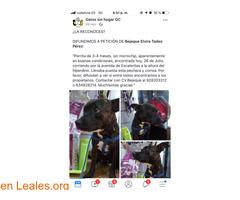 ENCONTRADA EN ESCALERITAS!!  LA CONOCES? - Imagen 4