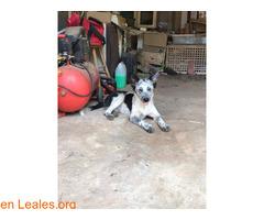 Lola en adopción - Imagen 1