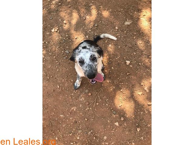 Lola en adopción - 2