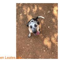 Lola en adopción - Imagen 2