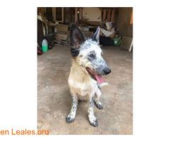 Lola en adopción - Imagen 4