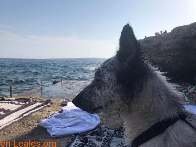Lola en adopción - 5