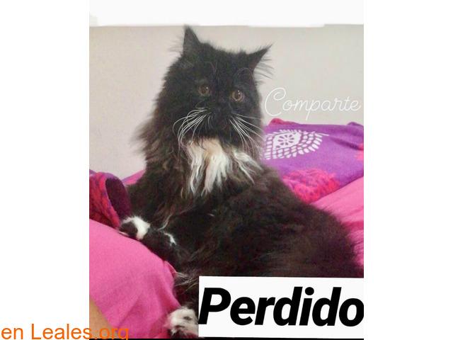 PERDIDO, CIUDAD DEL CAMPO**  LO HA VISTO - 2