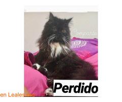 PERDIDO, CIUDAD DEL CAMPO**  LO HA VISTO - Imagen 2