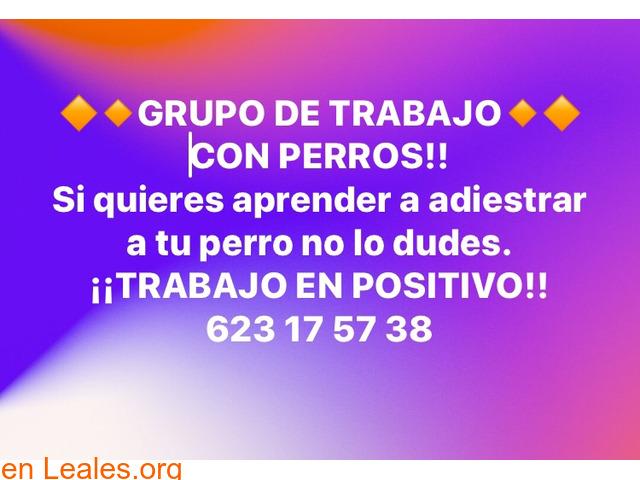 GRUPO DE TRABAJO,   EDUCANDO A PERROS** - 1