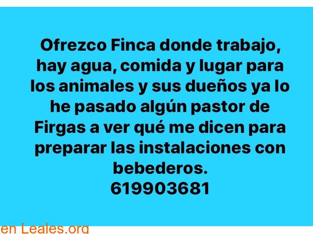 OFRECE FINCA PARA ANIMALES EVACUADOS!!  - 1