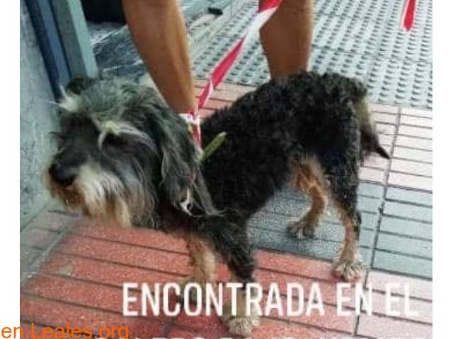 ENCONTRADA EN EL CALERO BAJO** LA CONOCE - 1