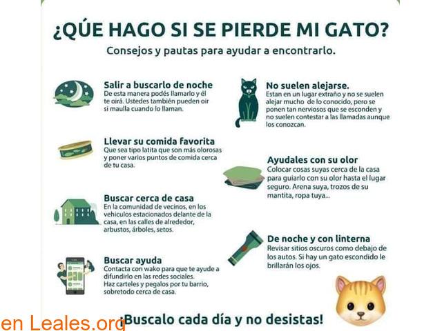 CONSEJOS PARA BUSCAR GATOS PERDIDOS - 1