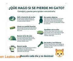 CONSEJOS PARA BUSCAR GATOS PERDIDOS - Imagen 1