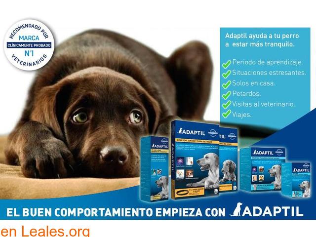 ADAPTIL para el comportamiento en perros - 1