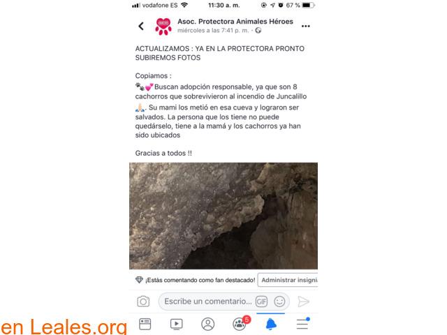 ADOPCIÓN RESPONSABLE POR FAVOR.  GRACIA - 4