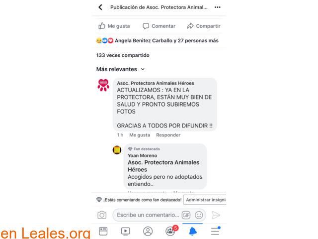 ADOPCIÓN RESPONSABLE POR FAVOR.  GRACIA - 5